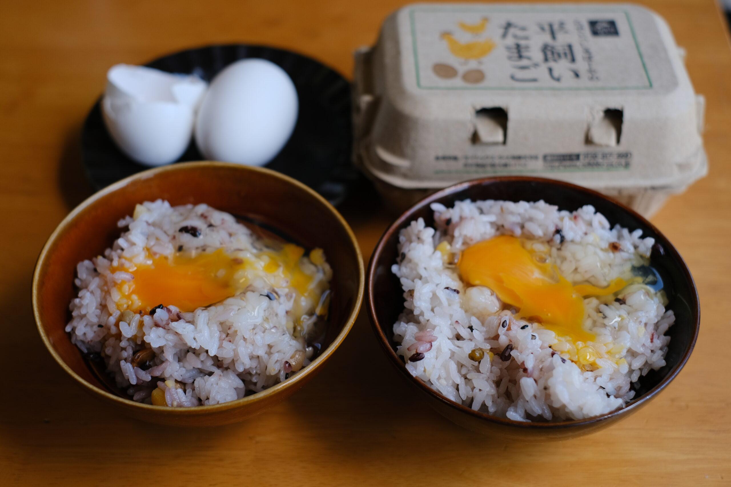 普通の卵とらでぃっしゅぼーやの卵を卵かけご飯で食べ比べ